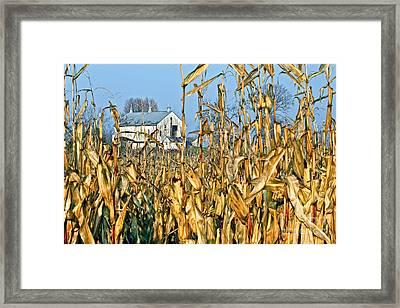 Corn Framed Barn Framed Print