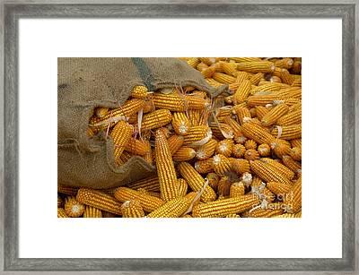 Corn Framed Print by Ingo Schulz