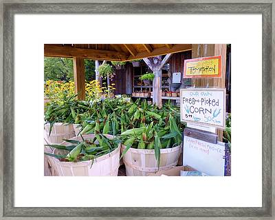 Corn Framed Print by Janice Drew