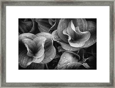 Corn Lilies - Black And White Framed Print by The Forests Edge Photography - Diane Sandoval