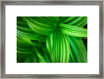 Corn Lily Glacier National Park Montana Framed Print by Rich Franco