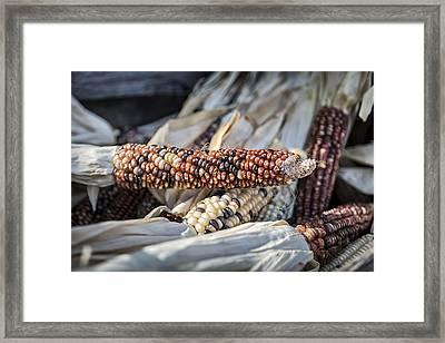 Corn Of Many Colors Framed Print