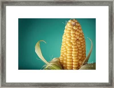 Corn On The Cob Framed Print by Sharon Dominick