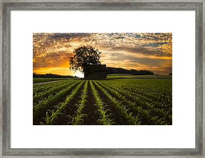 Corn Rows Framed Print by Debra and Dave Vanderlaan