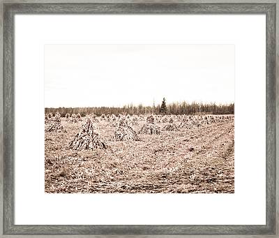 Corn Shocks Framed Print by Maggy Marsh