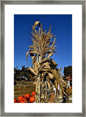 Framed Print featuring the photograph Corn Stalk by Michael Gordon