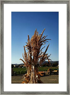 Framed Print featuring the photograph Corn Top by Michael Gordon
