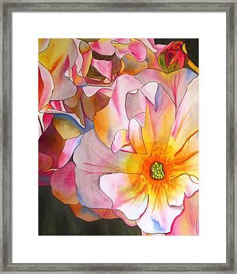 Cornelia Rose Framed Print by Sacha Grossel