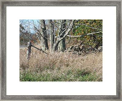 Corner Of The Field  Framed Print by Loretta Pokorny