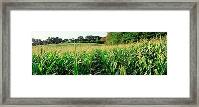 Cornfield, Baltimore County, Maryland Framed Print by Panoramic Images