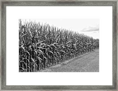 Cornfield Black And White Framed Print