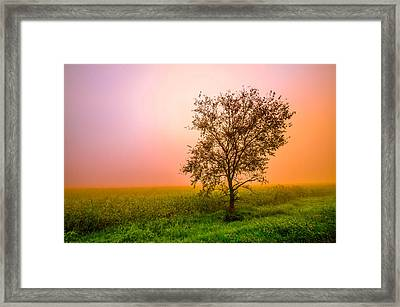 Cornfield Colors Framed Print by Brian Stevens