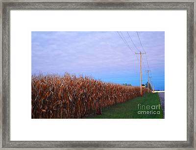 Cornfield In Autumn Framed Print by Luther Fine Art