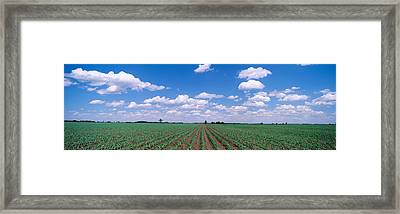 Cornfield, Marion County, Illinois, Usa Framed Print by Panoramic Images