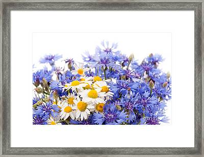 Cornflower And Chamomile Bunch Blooms  Framed Print by Arletta Cwalina