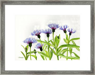 Cornflowers Framed Print by Sharon Freeman