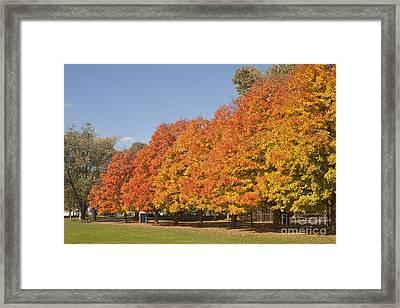 Corning Fall Foliage 3 Framed Print