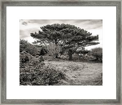 Cornish Delights Framed Print