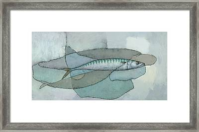 Cornish Mackerel Framed Print by Steve Mitchell