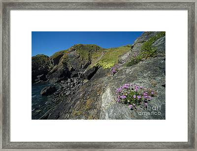 Cornish Thrift Framed Print by Rob Hawkins