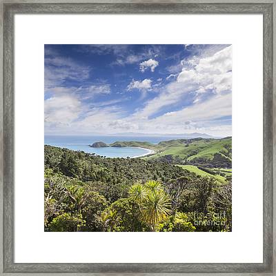 Coromandel Port Jackson New Zealand Framed Print by Colin and Linda McKie