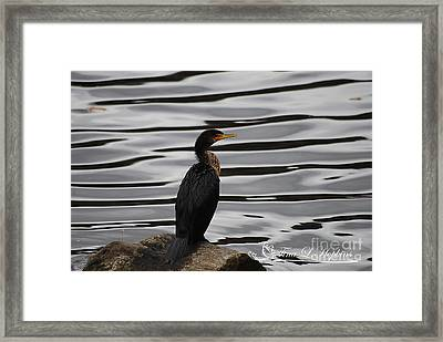 Framed Print featuring the photograph Coromont by Tina Hopkins