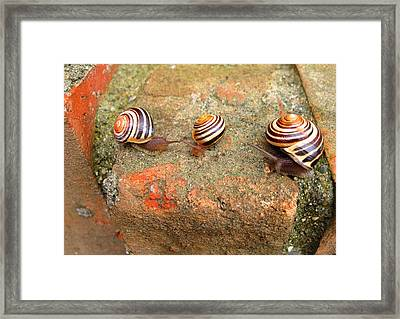 Framed Print featuring the photograph Corporate Meeting by Mary Bedy