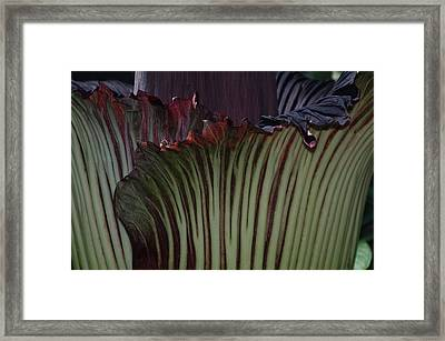 Framed Print featuring the photograph Corpse Flower Detail 1 by Sheila Byers