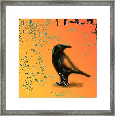 Corvus Looking Back Framed Print by Marcello Cicchini