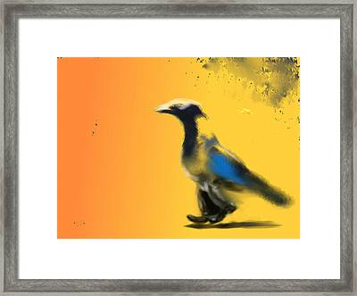 Corvus Out For A Walk Framed Print by Marcello Cicchini