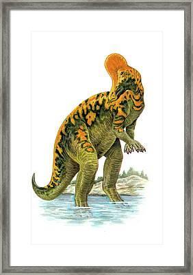 Corythosaurus Dinosaur Framed Print