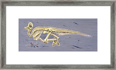 Corythosaurus Dinosaur Skeleton Framed Print
