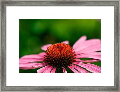 Cosmic Cone Flower Framed Print by Mela Luna