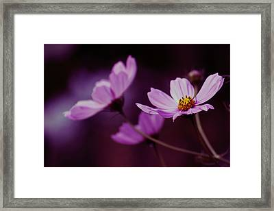 Framed Print featuring the photograph Cosmo After Glow by Kay Novy