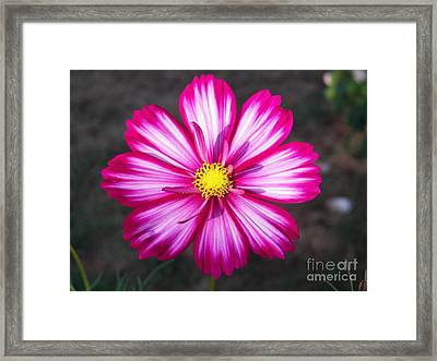 Cosmo Framed Print by Judy Via-Wolff
