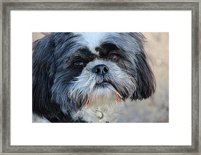 Cosmo Mugshot Framed Print by Michael Williams