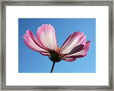 Framed Print featuring the photograph Cosmos 1 by Gerry Bates