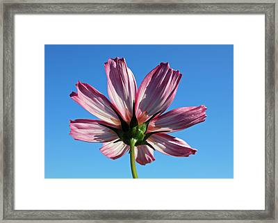 Framed Print featuring the photograph Cosmos 2 by Gerry Bates