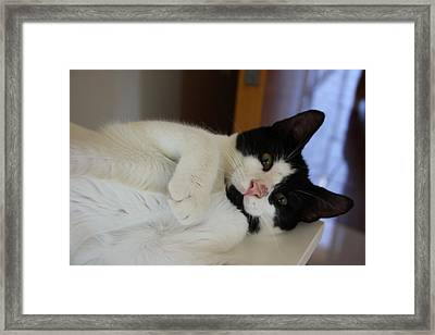 Cosmos Framed Print by Anita Dale Livaditis