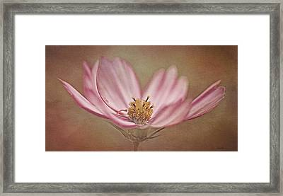 Cosmos Framed Print by Ann Lauwers