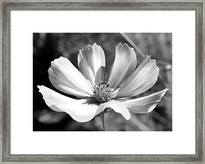 Framed Print featuring the photograph Cosmos Bw1 by Gerry Bates