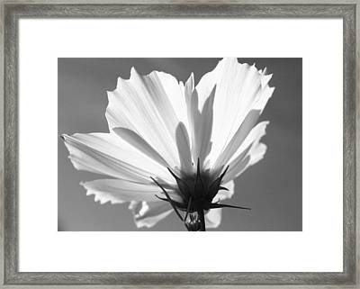 Framed Print featuring the photograph Cosmos Bw2 by Gerry Bates