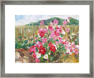 Cosmos In The Field Framed Print by Becky Kim