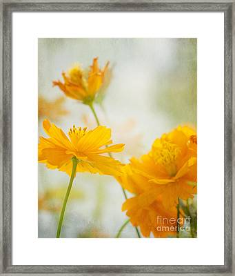 Cosmos Framed Print by Ivy Ho