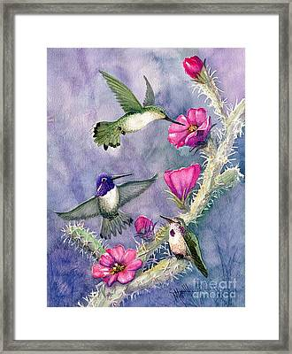 Costa Hummingbird Family Framed Print