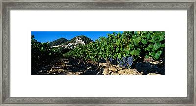 Cote Du Rhone Vineyard, Provence, France Framed Print by Panoramic Images