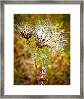 Framed Print featuring the photograph Cotten Grass by Jim Thompson