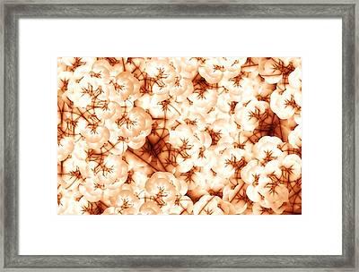 Cotton Framed Print