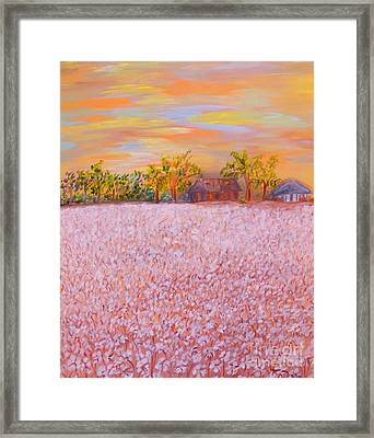 Cotton At Sunset Framed Print by Eloise Schneider
