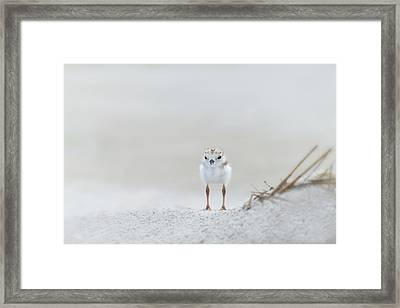 Cotton Ball With Legs Framed Print by Don Schroder